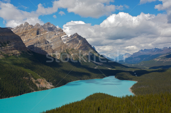 Peyto Lake in Banff National Park Stock photo © skylight