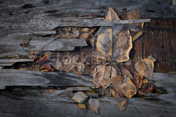Grungy autumn leaves on old plywood Stock photo © skylight