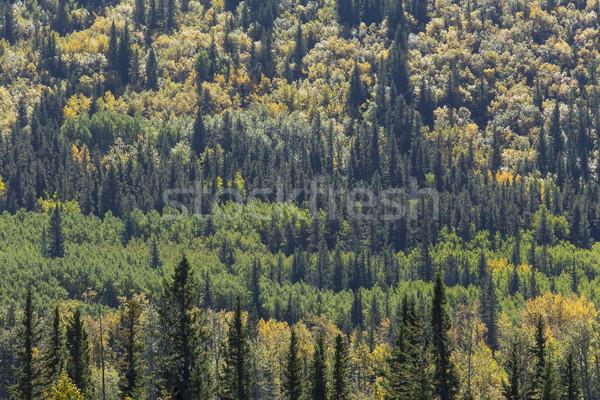осень цвета смешанный лес цветами стране Сток-фото © skylight