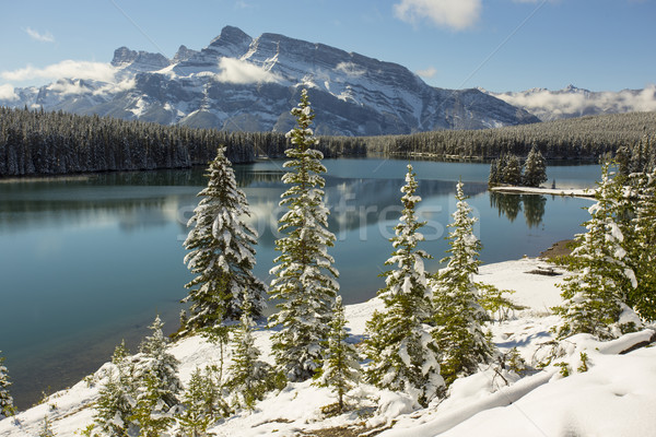 Iki göl park taze kar yağışı doku Stok fotoğraf © skylight