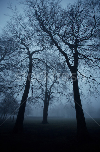 Arbres parc ville sombre brumeux Photo stock © skylight