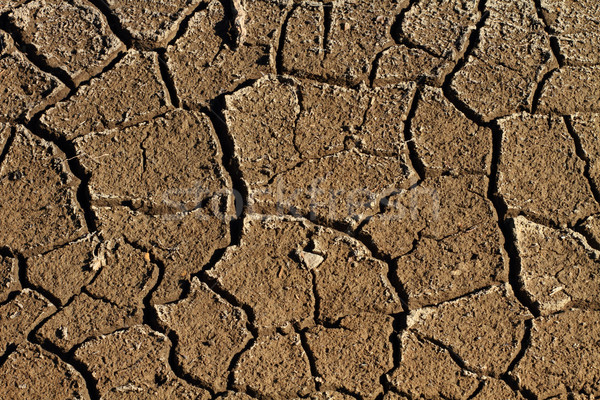 земле треснувший высушите грязи Сток-фото © skylight