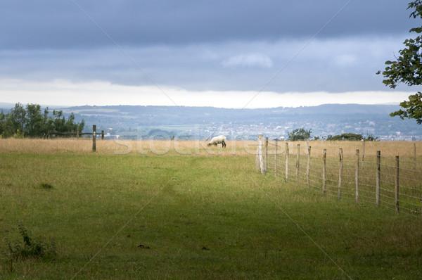 Ovelha campo ver beleza animal colina Foto stock © smartin69