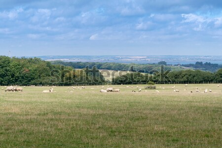 Kent Countryside View Stock photo © smartin69