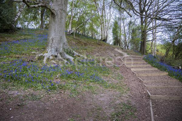 Bois sussex fleur Angleterre fleurs arbre Photo stock © smartin69