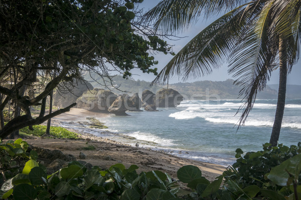 Isolated Beach in Barbados Stock photo © smartin69