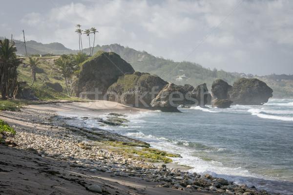 Barbados plaj doğa manzara yaz Stok fotoğraf © smartin69