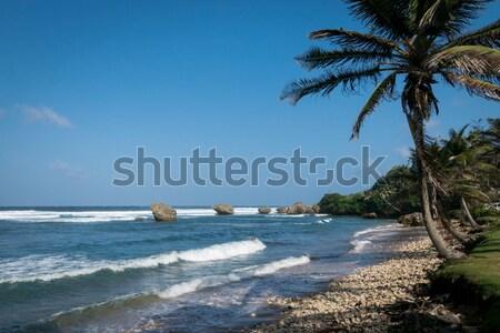 Plaj ağaç doğa manzara yaz Stok fotoğraf © smartin69