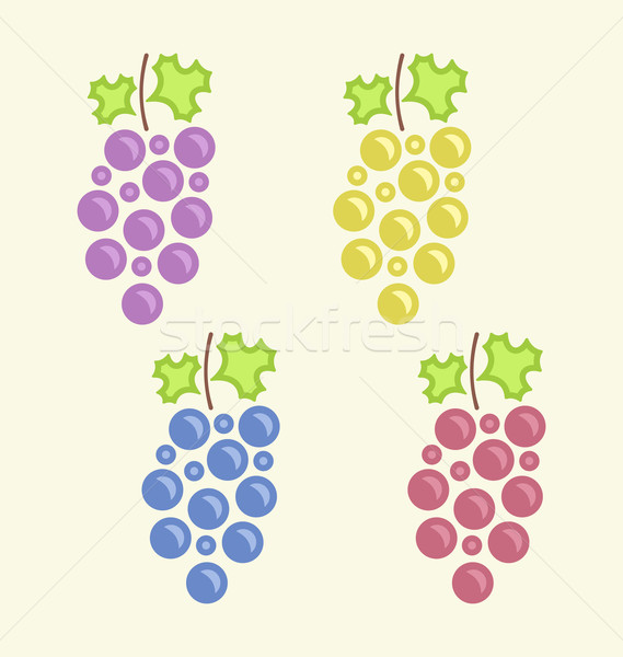 Set Colorful Bunches of Grape Stock photo © smeagorl