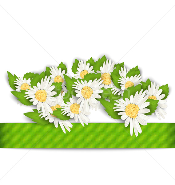 Beautiful Flowers Camomile with Shadows on White Background Stock photo © smeagorl