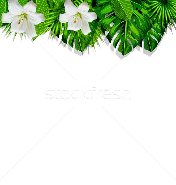кадр филиала тропические листьев белые цветы Лилия Сток-фото © smeagorl