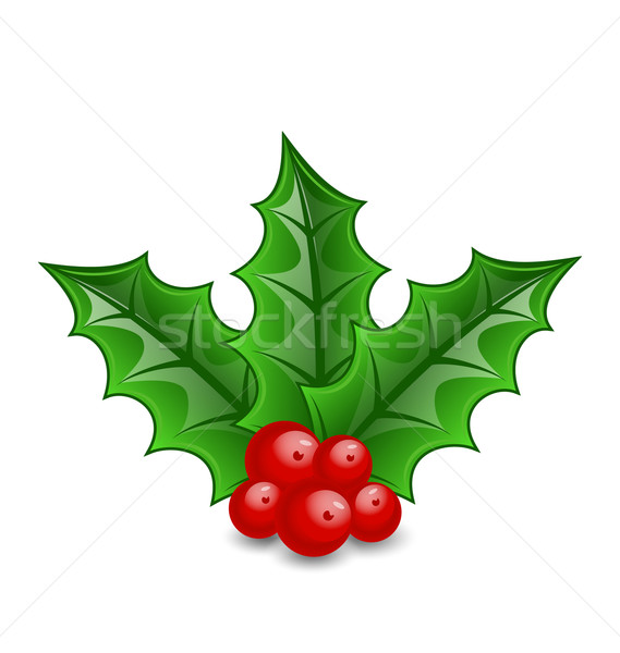 Christmas decoration holly berry branches isolated on white back Stock photo © smeagorl