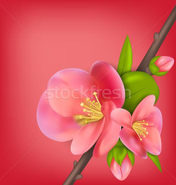 ág japán birsalma illusztráció virágzik tavasz Stock fotó © smeagorl