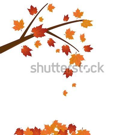 Branch of maple tree Stock photo © smeagorl