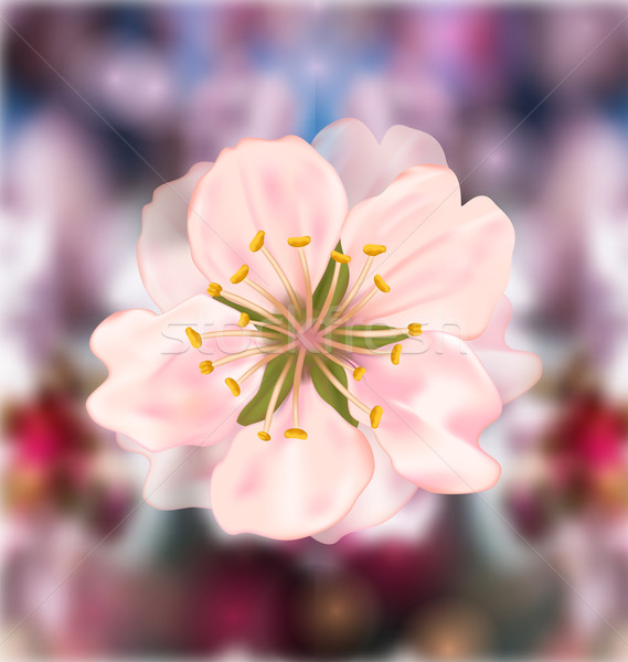 Flor de cerezo ilustración flor jardín fondo Foto stock © smeagorl