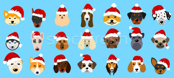 Set Different Breeds of Dogs in Hats of Santa Claus, Symbols New Year 2018 Stock photo © smeagorl