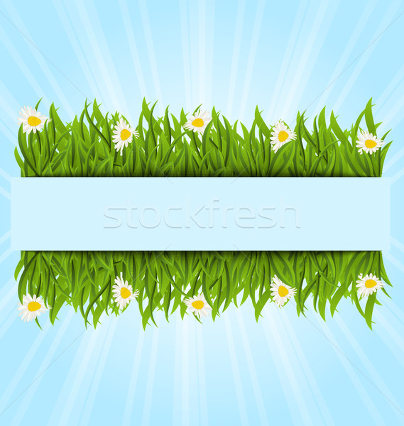 Stock photo: Spring postcard with grass field and flowers chamomiles, copy sp
