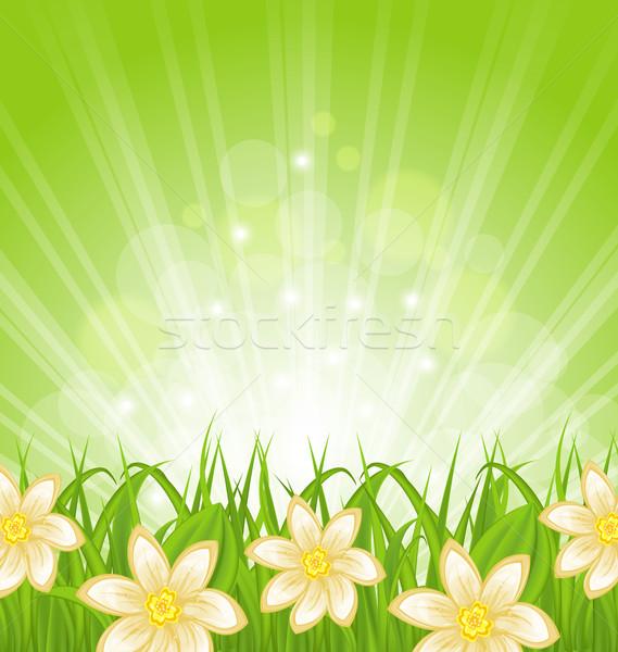 весны зеленая трава цветы иллюстрация цветок природы Сток-фото © smeagorl