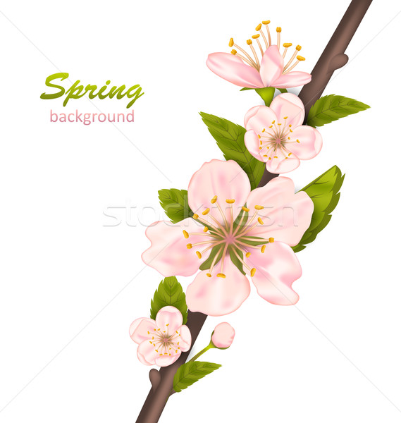 Spring Background with Cherry Blossom Stock photo © smeagorl