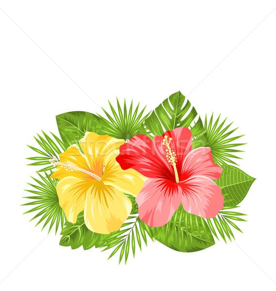 красивой красочный гибискуса цветы Blossom тропические Сток-фото © smeagorl