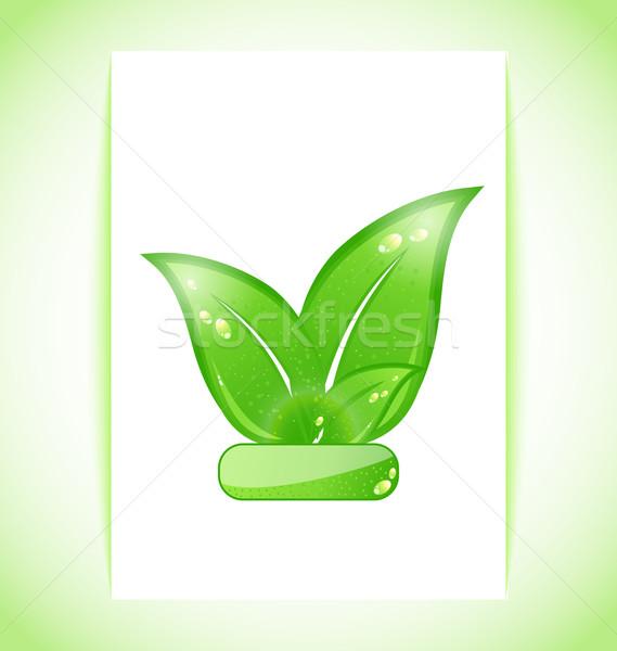 ストックフォト: 緑 · 自然 · 葉 · シート · 実例 · 春