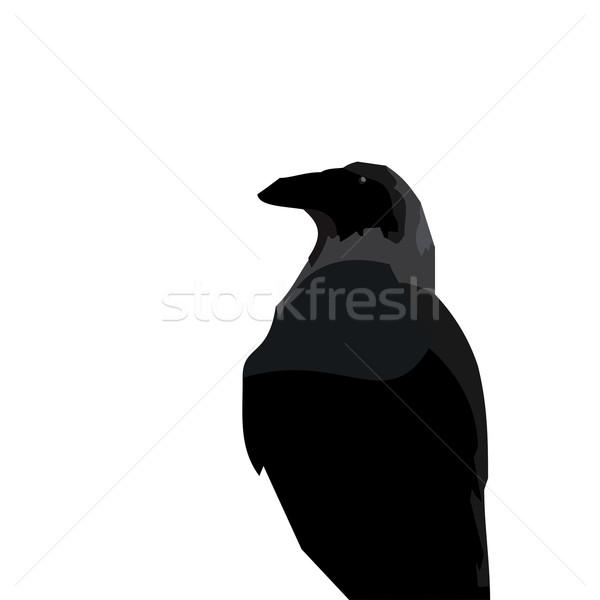Realistic illustraton of black raven Stock photo © smeagorl