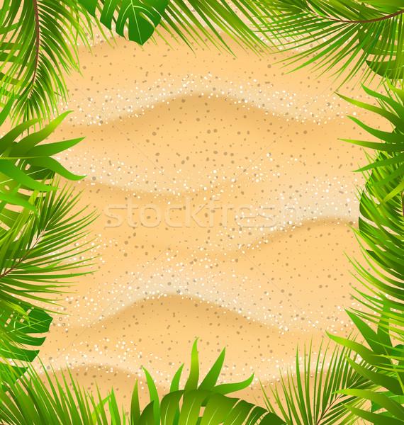 Mooie frame zanderig textuur exotisch planten Stockfoto © smeagorl