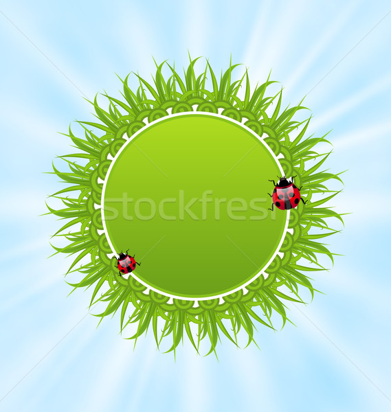 Primavera freschezza carta erba coccinelle illustrazione Foto d'archivio © smeagorl