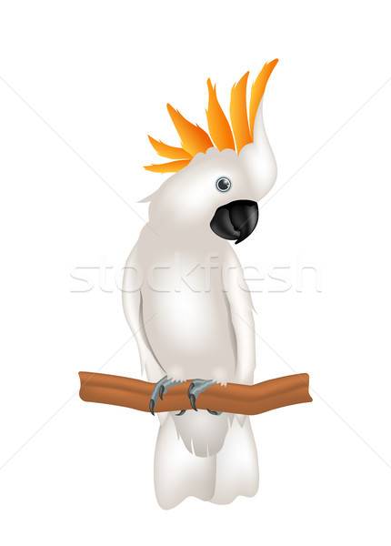 Mollucan Cockatoo Parrot On Branch, Exotic Bird with Crest Isolated Stock photo © smeagorl
