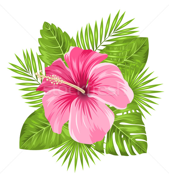 Beautiful Pink Hibiscus Flowers Blossom and Tropical Leaves Stock photo © smeagorl