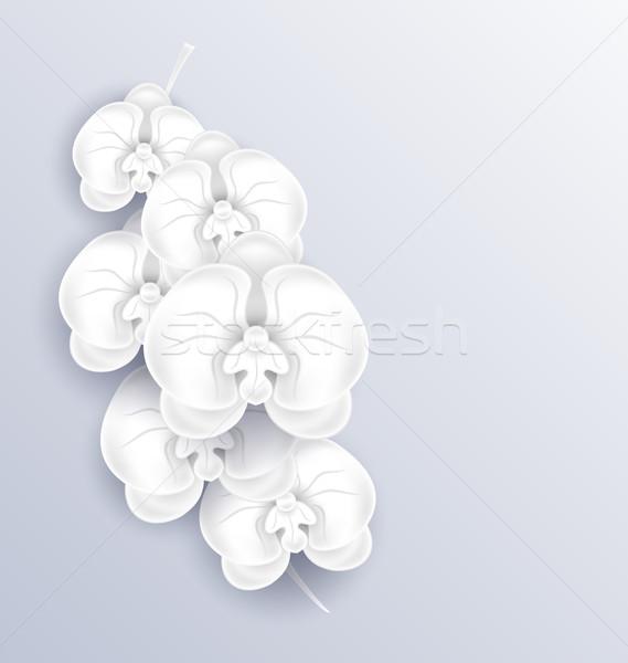 Brunch gyönyörű orchideák papír sablon másolat Stock fotó © smeagorl