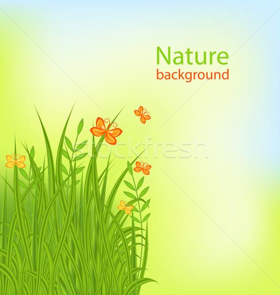 Nyár fű pillangók illusztráció tavasz levél Stock fotó © smeagorl