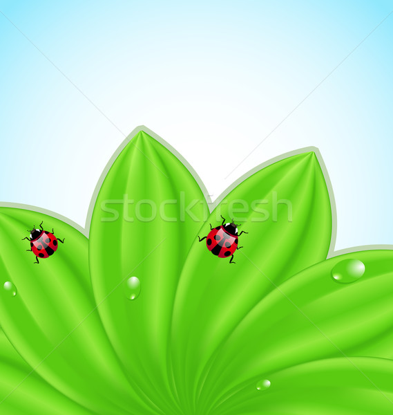 Green leaves ecology fresh background  Stock photo © smeagorl