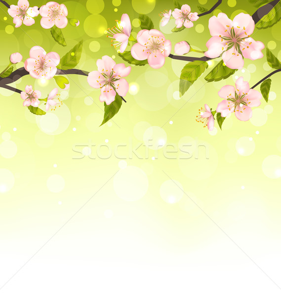 Cute Branches of Cherry Blossom Tree Stock photo © smeagorl