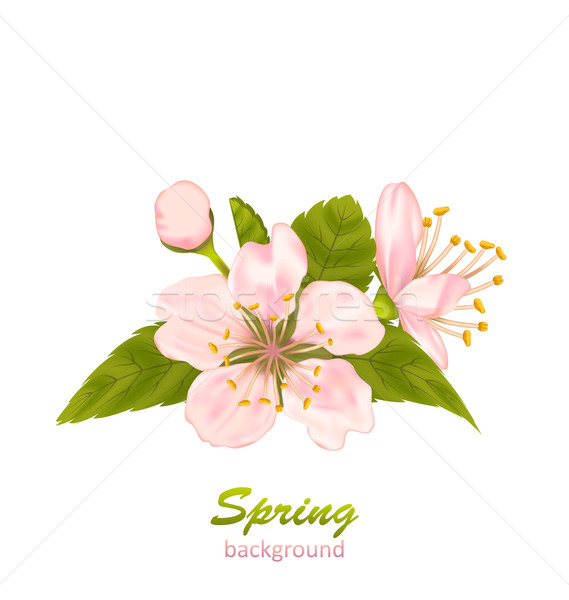Cherry Blossom with Leaves Isolated on White Background Stock photo © smeagorl