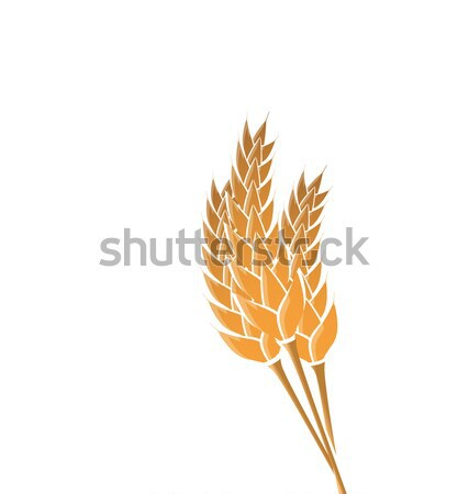 Ears of wheat isolated on white background Stock photo © smeagorl