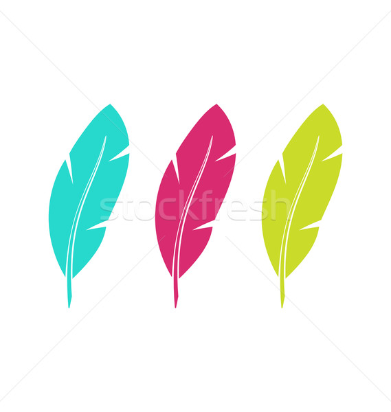 Set Colorful Feathers Isolated on White Background Stock photo © smeagorl