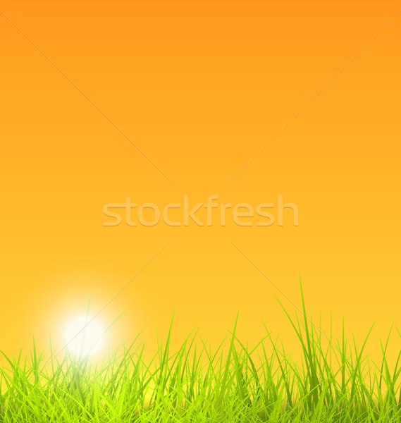 Summer Nature Background with Grass, Sunset Stock photo © smeagorl