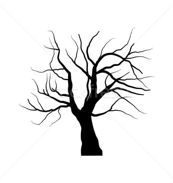 スケッチ 枯れ木 葉 孤立した 白 実例 ストックフォト © smeagorl