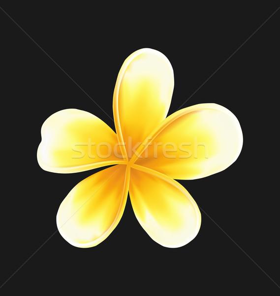 цветок изолированный темно иллюстрация весны природы Сток-фото © smeagorl