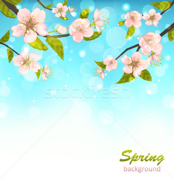 Beautiful Cherry Blossom Stock photo © smeagorl