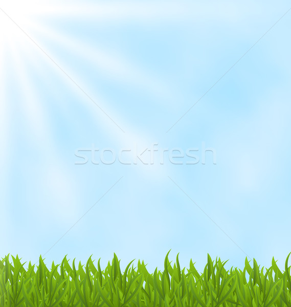 Summer background with green field and sky Stock photo © smeagorl