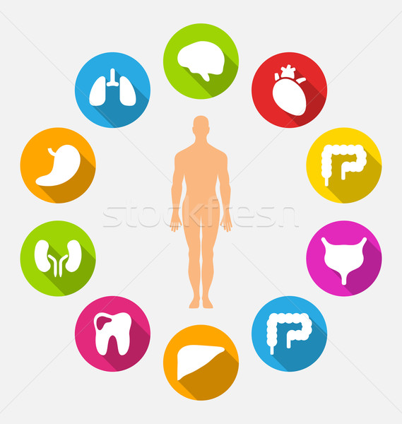 Silhouette Homme interne humaine organes illustration Photo stock © smeagorl