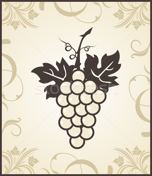 retro engraving of grapevine Stock photo © smeagorl