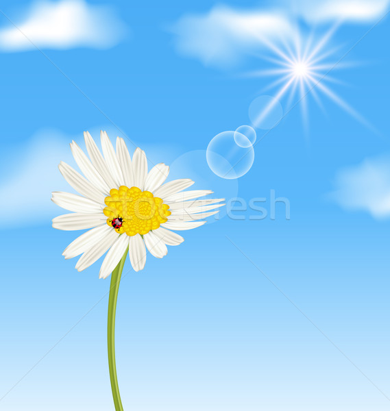 Chamomile flower and blue sky with clouds Stock photo © smeagorl
