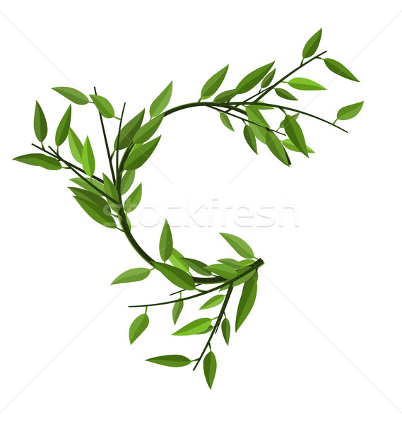 Curved Round Branch Bamboo Green Leaves Stock photo © smeagorl
