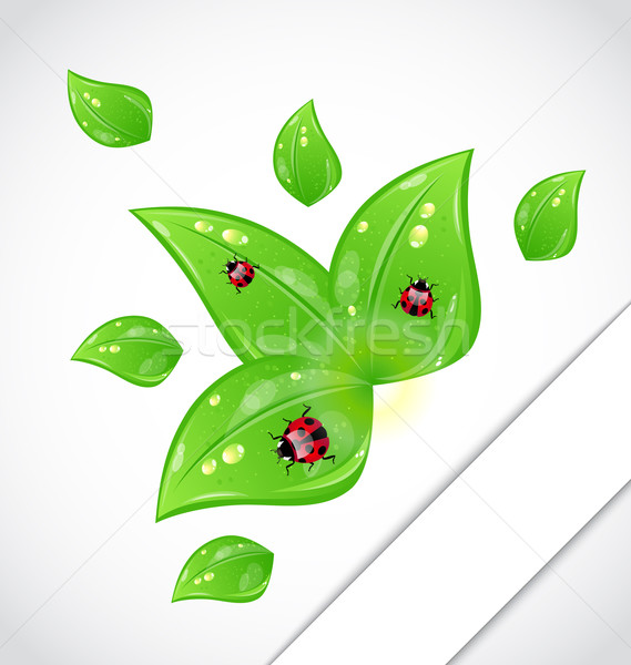 ストックフォト: 葉 · てんとう虫 · 外に · カット · 紙 · 実例