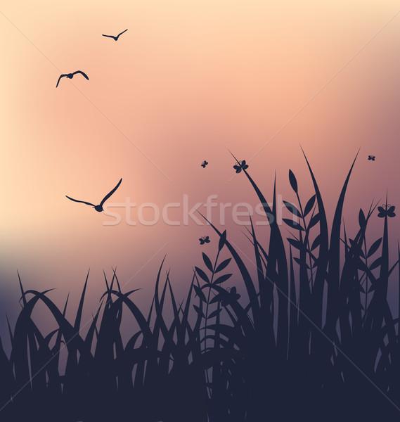 Foto stock: Pôr · do · sol · grama · voador · gaivotas · ilustração · paisagem