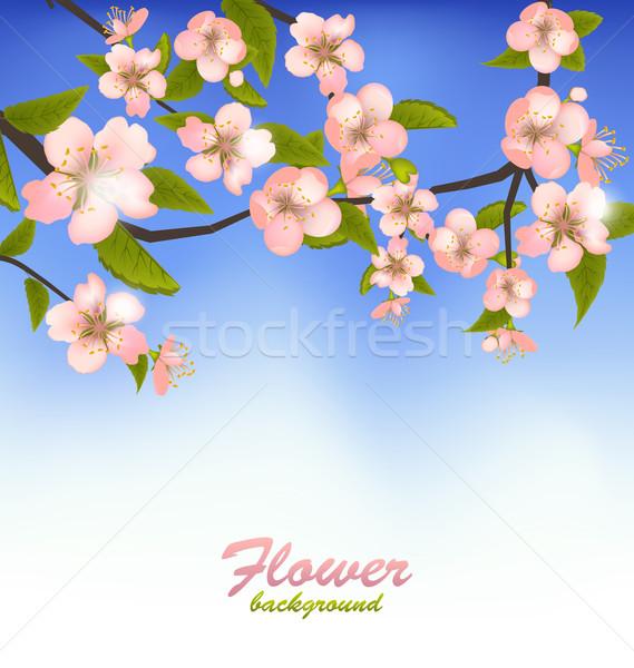 Tavasz virágzó faág virágok illusztráció égbolt Stock fotó © smeagorl