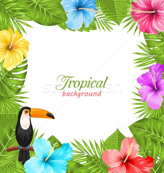 Stok fotoğraf: Tropikal · kuş · renkli · ebegümeci · çiçekler · örnek